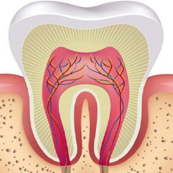 پاپ دندان شیری و دائمی